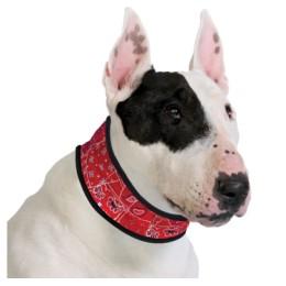 Collar Aqua CoolKeeper Red Western per a Gossos